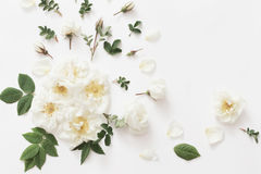 Rosas no fundo branco Fotografia de Stock Royalty Free