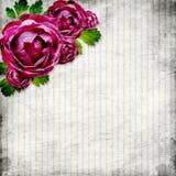 Rosas no fundo listrado do grunge Imagens de Stock Royalty Free