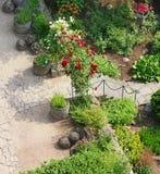 Rosas no jardim ajardinado Imagens de Stock Royalty Free