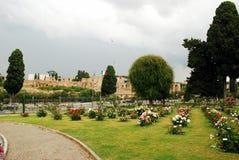Rosas no jardim da cidade de Roma o 31 de maio de 2014 Fotografia de Stock Royalty Free