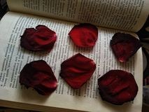 rosas no livro foto de stock royalty free