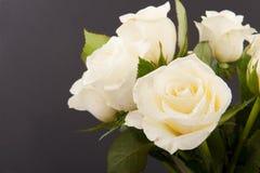 Rosas no preto Fotos de Stock Royalty Free