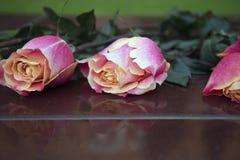 Rosas no quadrado vermelho Moscou Imagens de Stock Royalty Free