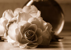 Rosas no sepia Foto de Stock Royalty Free