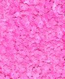 Rosas nupciales rosadas Wedding de arriba Fotografía de archivo libre de regalías