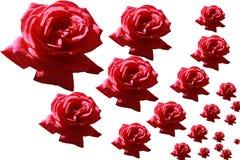 Rosas para la comida del diseño, otros meterials Foto de archivo libre de regalías