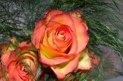 Rosas para o amor Imagem de Stock Royalty Free