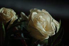 Rosas para tomar fotos de archivo libres de regalías