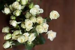 Rosas pequenas brancas bonitas frescas indoor Imagens de Stock Royalty Free