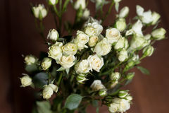 Rosas pequenas brancas bonitas frescas indoor Fotografia de Stock Royalty Free