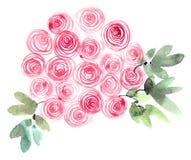 Rosas pintadas aquarela ilustração do vetor