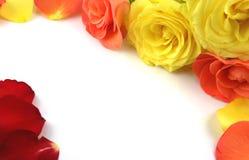 Rosas que forman un marco imagen de archivo