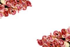 Rosas que hacen un marco Fotos de archivo