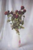 Rosas que se marchitan en florero Imágenes de archivo libres de regalías
