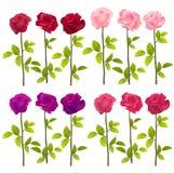 Rosas realísticas isoladas no branco Vetor Imagens de Stock Royalty Free