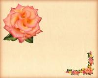 Rosas a recordar ilustración del vector