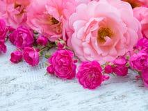 Rosas rizadas rosadas y pequeñas rosas rosadas vibrantes fotografía de archivo
