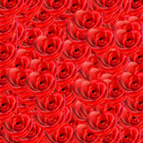 Rosas rojas Fotografía de archivo libre de regalías