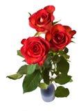 Rosas rojas Foto de archivo libre de regalías