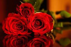 Rosas rojas Imagen de archivo