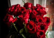 Rosas rojas Fotografía de archivo
