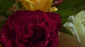 Rosas rojas, blancas, amarillas con descensos del agua en el sol de la mañana Ramo fabuloso de flores Primer