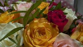 Rosas rojas, blancas, amarillas con descensos del agua en el sol de la ma?ana Ramo fabuloso de flores Primer