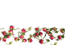 Rosas rojas brillantes en un fondo blanco Fotografía de archivo
