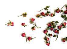 Rosas rojas brillantes en un fondo blanco Foto de archivo libre de regalías
