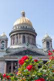 Rosas rojas contra catedral del St Isaac en el verano Foto de archivo libre de regalías