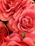 Rosas rojas de la abundancia Foto de archivo libre de regalías