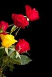 Rosas rojas del día de tarjeta del día de San Valentín aisladas Imagen de archivo libre de regalías