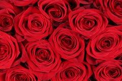 Rosas rojas del fondo el día de la tarjeta del día de San Valentín o de madres Fotos de archivo