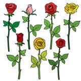 Rosas rojas del vector con los brotes de flor aislados en blanco Ilustración de la historieta stock de ilustración