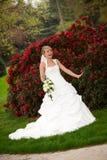 Rosas rojas divertidas de risa de la novia Imagen de archivo libre de regalías