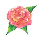 Rosas rojas dulces del día de tarjetas del día de San Valentín Fotos de archivo libres de regalías