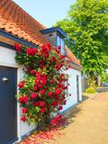 Rosas rojas en casa blanca de madera Fotos de archivo libres de regalías