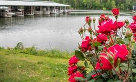 Rosas rojas en el puerto deportivo con los barcos en fondo Imagen de archivo