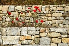 Rosas rojas en la abadía de Novacella, el Tyrol del sur, Bressanone, Italia Foto de archivo