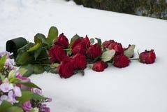 Rosas rojas en la nieve en un cementerio imagen de archivo libre de regalías