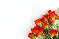 Rosas rojas en un fondo blanco Foto de archivo libre de regalías