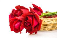 Rosas rojas en un fondo blanco Imágenes de archivo libres de regalías