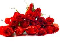 Rosas rojas en un fondo blanco Fotos de archivo libres de regalías
