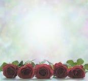 Rosas rojas en un fondo brumoso del bokeh Imagen de archivo libre de regalías