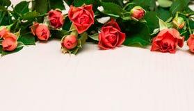 Rosas rojas en un fondo de madera ligero Día de Women s, tarjetas del día de San Valentín fotografía de archivo libre de regalías
