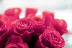 Rosas rojas hermosas fotografía de archivo