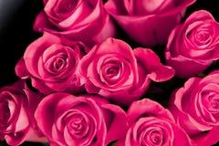 Rosas rojas hermosas foto de archivo libre de regalías