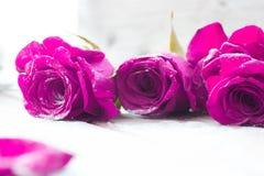 Rosas rojas hermosas Imagen de archivo