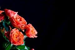 Rosas rojas hermosas en negro Imagen de archivo