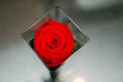 Rosas rojas hermosas en un florero cuadrado Fotografía de archivo libre de regalías